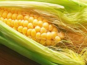 祛除体内湿气先养好脾胃!多吃黄色食物