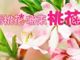 5月男女桃花预先报