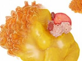 燃烧脂肪才能减重 推荐几种燃脂有效的运动